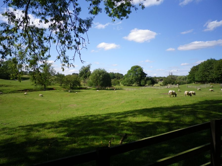 Site of the Former Fishponds of Lavendon Abbey - 22 August 2010