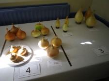 A Fine Set of Onions
